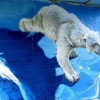 Дамба-ледник.  Авторы Сергей Шевелев и Александр Аржанов.