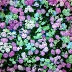 Из этих цветов будет создан оберег.