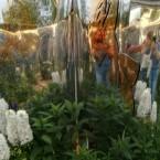 "Мои маски в стиле рококо в саду ""Зеркала природы"""