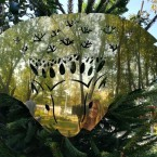 В отражении Короля леса
