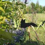 Кошки среди трав