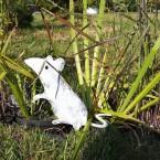 Мышка среди трав