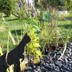 Каждый кот занят своим делом.  Благодаря этому, сад кажется живым.