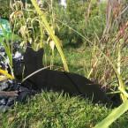 Релакс среди трав